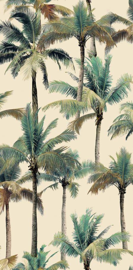 Płytka z motywem palmy 50x100