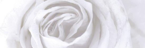płytki dekoracyjne kwiat aparici Vergel Decor A