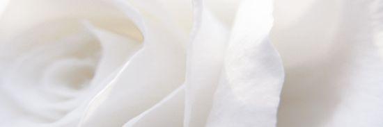 dekor kwiatowy 25x75 Vergel Decor B aparici