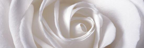 dekor kwiatowy Vergel Decor C aparici